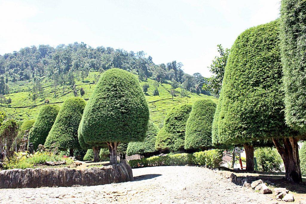 6 Wisata Alam di Bandung yang Instagrammable 1